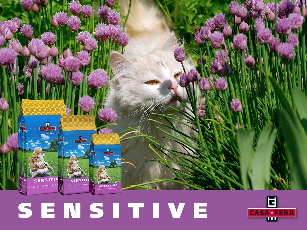 cat_sensitive